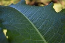 Fig 5. Leaf 3 (2017)